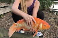영국서 가장 큰 금붕어 잡은 10살 소녀
