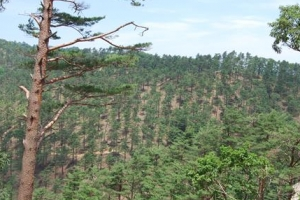 [산림청 명품 숲] 자연의 기운 가득한 대관령 명품 숲으로