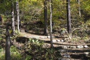[산림청 명품 숲] 힐링을 느낄 수 있는 자연생태계의 보고 '금강송 숲길'