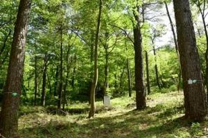 [산림청 명품 숲] 숲의 웅장함 느낄 수 있는 전북 무주 '리기다소나무 숲', '독일가…