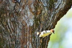 [그 책속 이미지] 백두산 아기새의 '독립'  6년 기다림 끝에 담다