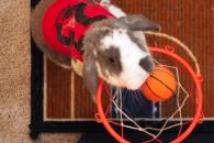 덩크슛으로 기네스 세계 기록 오른 농구왕 토끼