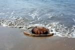 '대형 해파리 사체' 다…