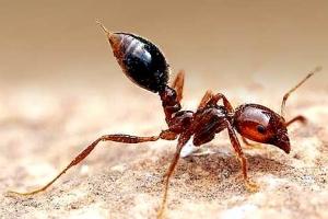 [씨줄날줄] 살인 개미와 악성 외래종/이순녀 논설위원
