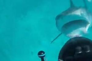 거북 사냥하다 갑자기 스쿠버 다이버 공격한 상어
