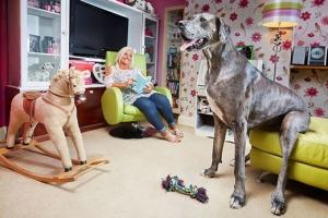 [기네스 포토] 세계에서 가장 큰 개  '프레디'