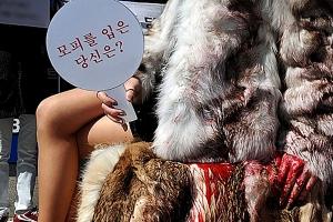 """구찌, 모피 사용 중단 결정…동물권단체 """"세계적인 움직임되길"""""""