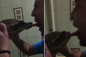 거북에 뽀뽀하려다 혀 잘릴 뻔한  남성