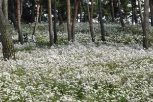 [포토 다큐] 가을 '꽃' 편지가 안부를 묻습니다
