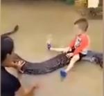 길이 6m 비단뱀이 아이와…