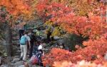 울긋불긋 꽃대궐… 가을빛…