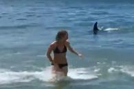 범고래 접근에 식겁한 피서객들