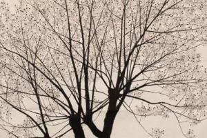 전통 일본회화의 현대적 해석, 아라이 케이전(展),