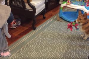 [별별영상] 코끼리 복장 입은 아기 본 강아지 반응