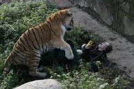 사육사 덮친 시베리아 호랑이…끔찍한 순간