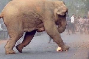 코끼리들의 미친 질주? 알고 보면 사람들 공격에 달아나는 것