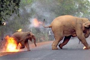 [포토] '지옥이 바로 여기'… 인도의 불타는 코끼리