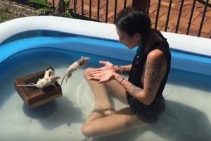 호주 모델이 키우는 애완 쥐의 애교 점프