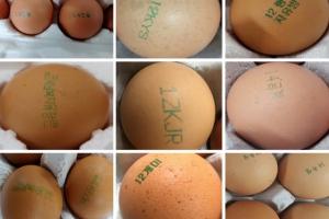 8월부터 달걀 생산환경 공개…숫자 '1' 의미는