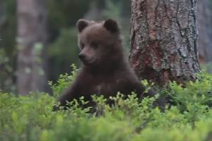 자연 속 포착된 새끼곰의 귀여운 일상