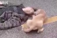 도로 쓰러진 주인 깨우려 몸부림치는 개