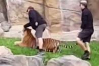 호랑이 학대하는 사육사들?…SNS 영상 논란