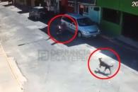멕시코서 여성 행인 핏불테리어에 공격당해