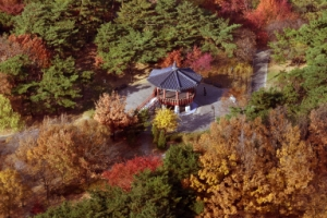 [서울포토] 형형색색 단풍으로 물든 여의도 공원