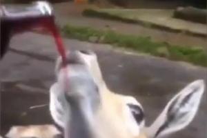 사파리 공원 동물에 술 먹인 황당 관람객들…인니 당국 조사착수