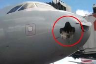 대형 새와 충돌로 기체 뚫린 채 착륙한 美 여객기