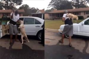 개를 짐짝 다루듯…학대 영상에 누리꾼 공분