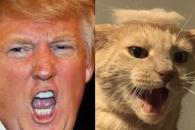 美대통령 머리스타일 한 '트럼프 고양이' 열풍