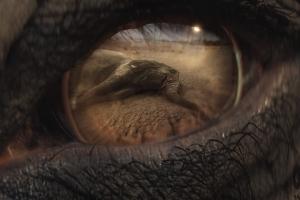 코끼리 눈에 비친 밀렵 순간…세계자연기금 광고 화제