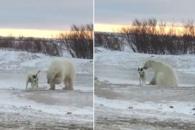 썰매개와 친구가 되고픈 북극곰의 일탈