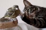 [별별영상] 깜찍한 새 본 고양이의 행동