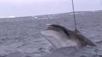 [영상] 잔혹한 일본 고래잡…