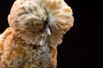 '엄청나 닭~~'