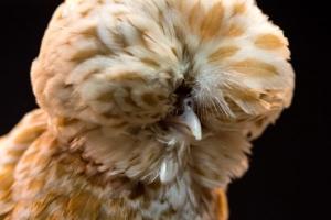 [포토] '엄청나 닭~~'