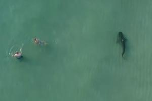 피서객 물놀이 즐기는 해안가에 나타난 식인상어