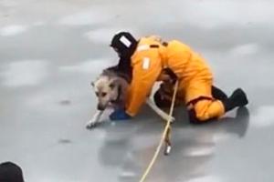 얼어붙은 개울 갇힌 강아지 구조 순간