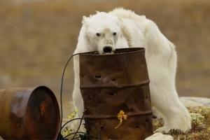 카메라에 포착된 북극곰의 애처로운 일상