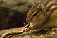 뱀 vs 다람쥐, 생존대결의 결과는?