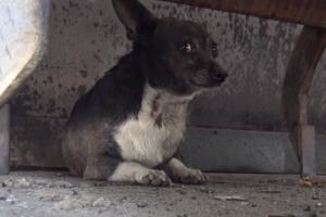 동물보호단체에 구조돼 새 삶 찾은 왕따견 '휴고'