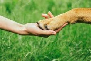 인류, 개와  손잡고 살아남았다