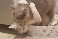 [별별영상] 고양이 커플의 끈적끈적한 애정표현