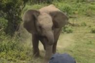 기세등등하던 새끼 코끼리의 귀여운 반전