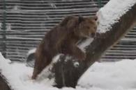 20년 동안 갇혀 있던 곰…눈 본 반응은?