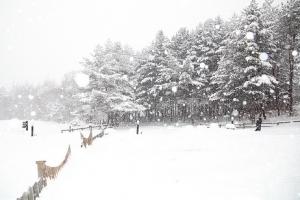화이트 크리스마스 실종은 한국만? 서유럽도 마찬가지