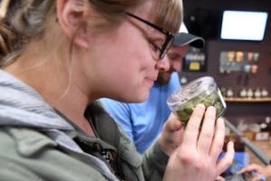 미국 캘리포니아, 새해부터 마리화나 합법화