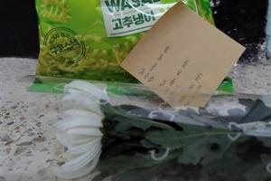 [포토] 고준희양 집앞에 놓인 국화 한 송이와 편지